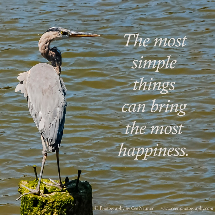 The most simple things can bring the most happiness, uplift, motivate, inspire, photography, Cee Neuner, ceenphotography.com, blue heron, bird, animal, water