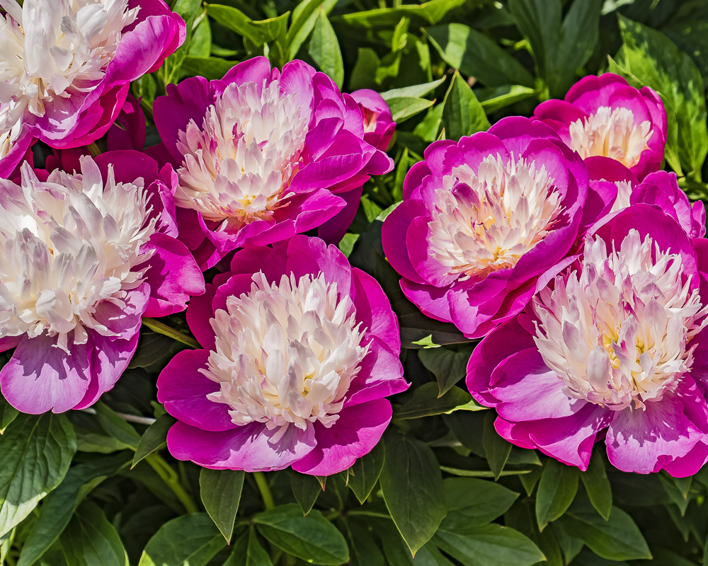 Weekly Prompt's Challenge – Weekend Challenge – Flower Power