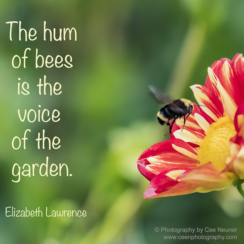 Pick Me Up: The hum of bees is the voice of the garden