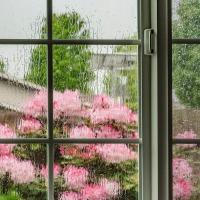 FOTD - September 17 - Hoping for rain outside my window
