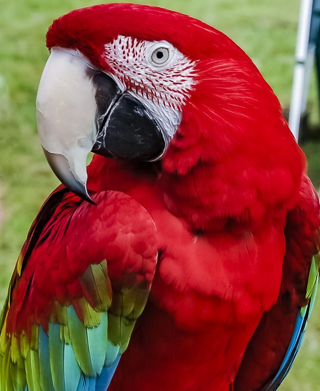 Bird Weekly – Photo Challenge – Domesticated Birds