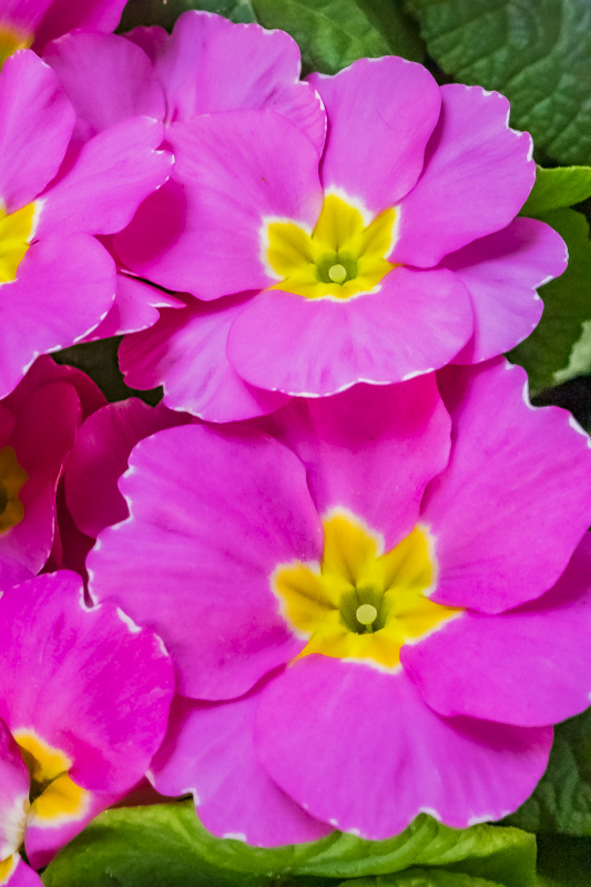 Cee's Fun Foto Challenge: Pink and Yellow (separately or combined)