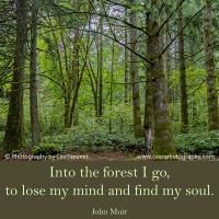 Pick Me Up:  Into the forest I go ...