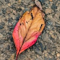 FOTD - October 25 - Autumn Crispness