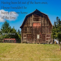 Having been let out of the barn once...